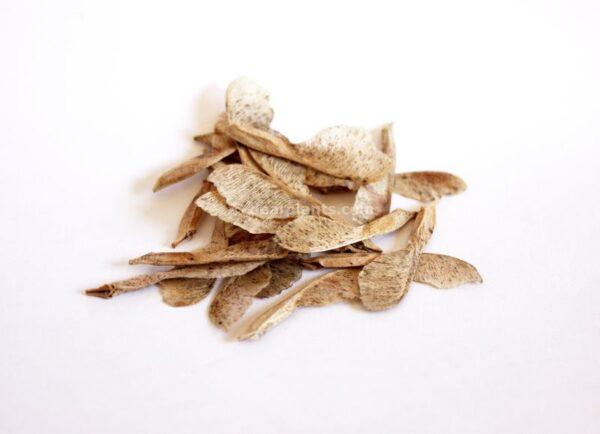 Acer negundo (Box elder maple, ash-leaved maple) seeds