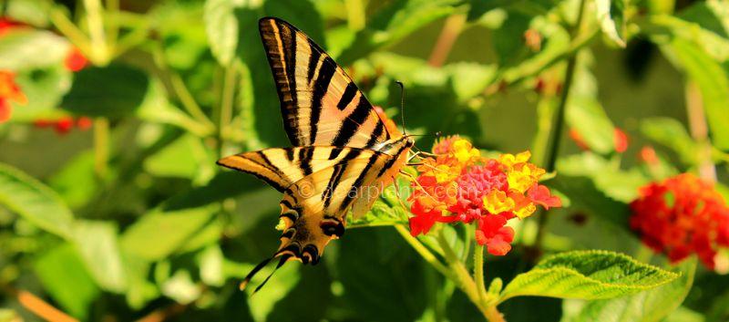 dearplants.com - Butterfly in the Garden