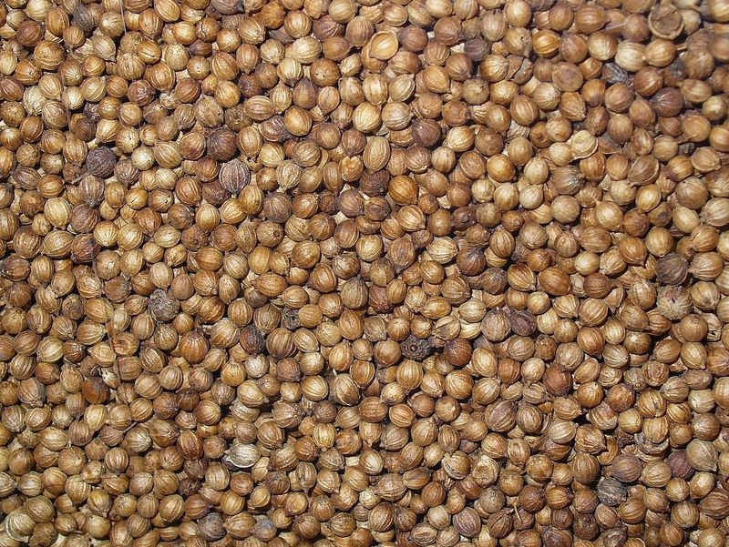Coriandrum sativum (Coriander) - seeds