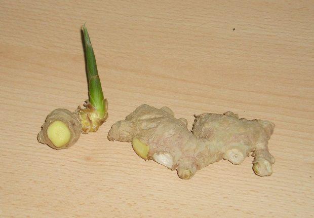How to plant ginger (Zingiber officinale) - rhizome