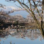 Tokyo celebrates Hanami - 10 places to see the cherries in flower
