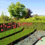 Garden styles - Concept gardens - dearplants.com