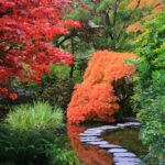 Garden styles - Japanese gardens - dearplants.com