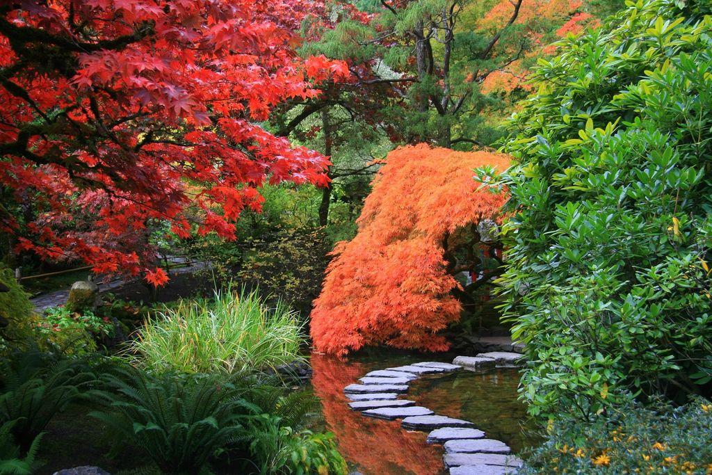 Japanese Gardens - Dear Plants