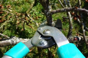 Gardening in November. What to do - Pruning deciduous - dearplants.com