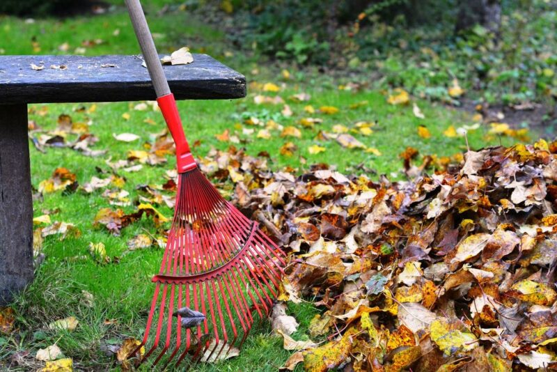 Gardening in October. What to do - rake the fallen leaves
