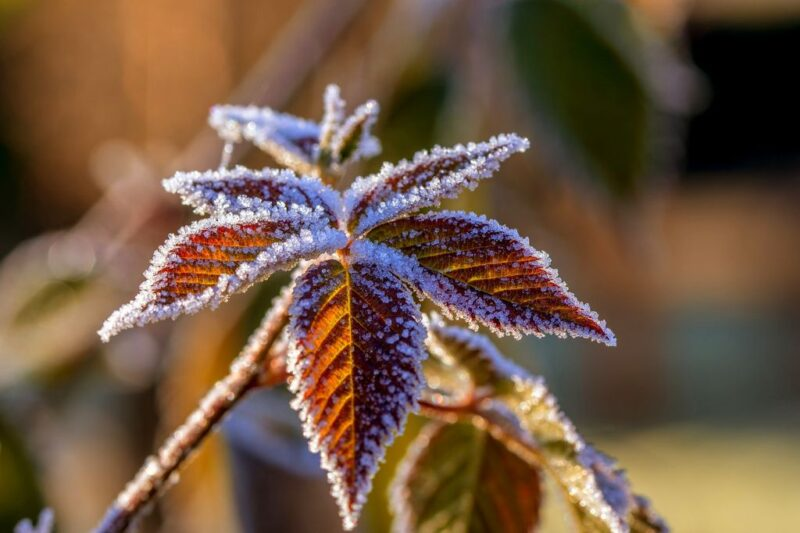 December in the garden, what to do - Frost over leaves