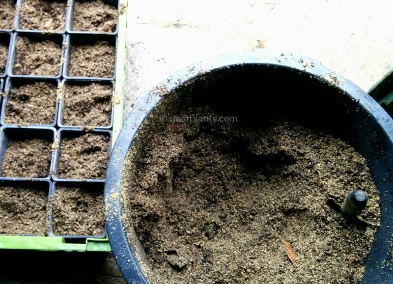 How to propagate plants by hardwood cuttings - propagation guide - soil using one part coarse sand and one part peat moss or potting soil