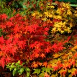 Fall 2018, a colorful autumn gallery