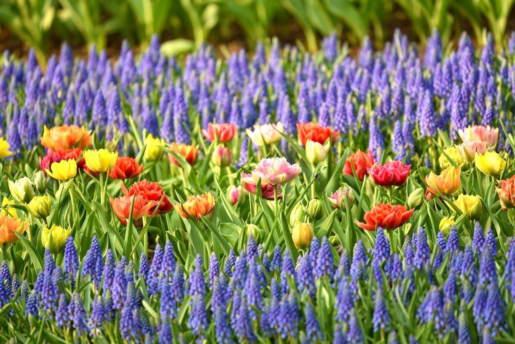 Gardening jobs for March. What to do - dearplants.com