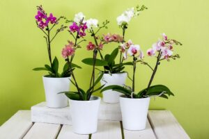 How to care for orchids - dearplants.com