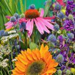 How to create a low maintenance garden - ideas - dearplants.com