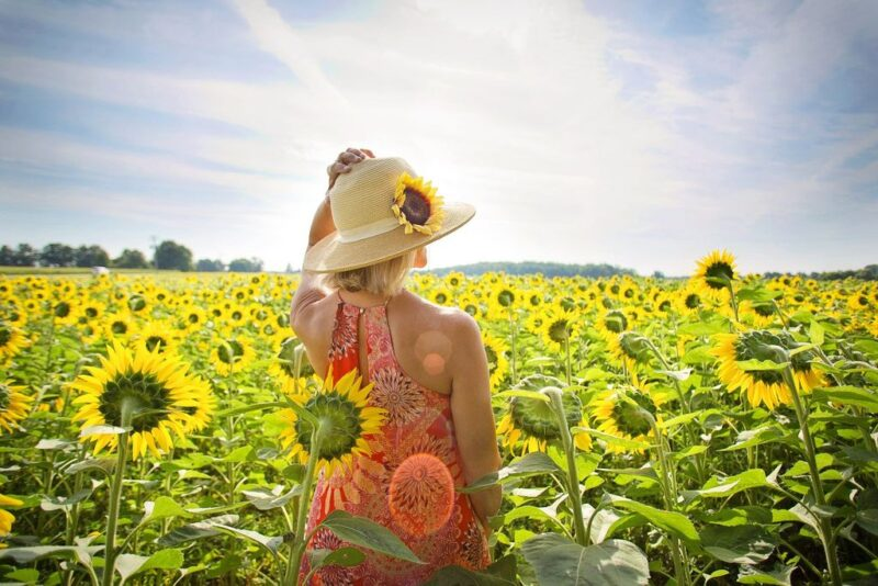 Helianthus annuus (Sunflower) - woman in sunflower field - www.dearplants.com