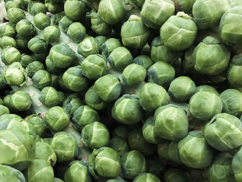 How to plant Brussels sprouts (Brassica oleracea gemmifera) - sprouts harvested with the entire plant - www.dearplants.com.jpg