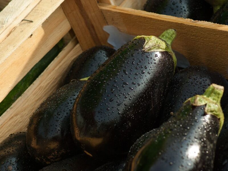 How to plant and grow eggplant or aubergine (Solanum melongena) - harvest eggplant - www.dearplants.com