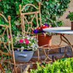 What to do in June in the garden - www.dearplants.com