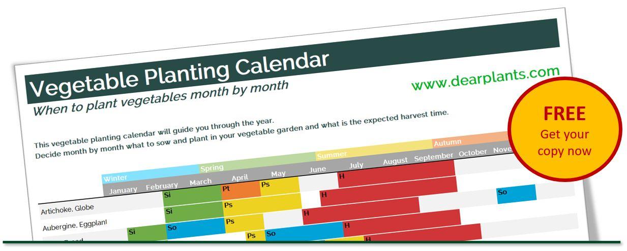 banner-vegetable-planting-calendar-www.dearplants.com_